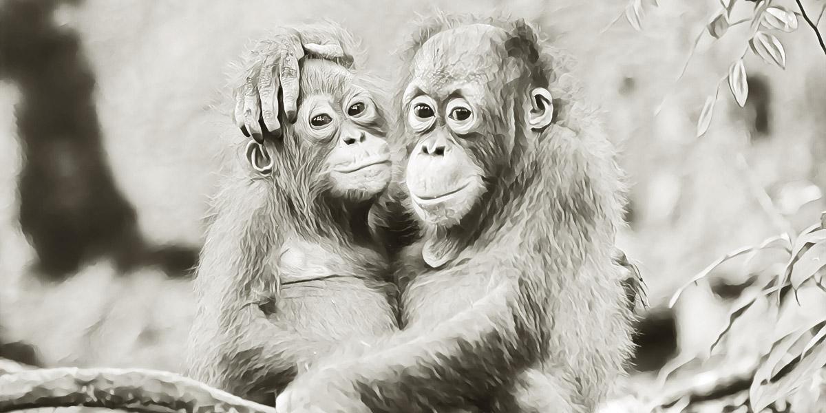 Эволюция любви. Вы на какой стадии?